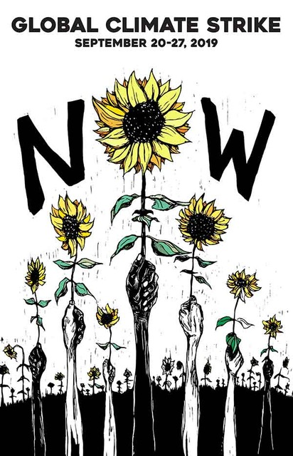 NOW Sunflower