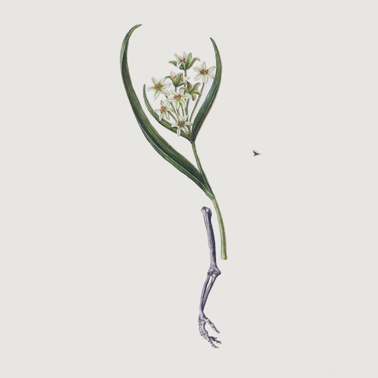 Ellie Douglass collage - arm with white flowers and leaves 2