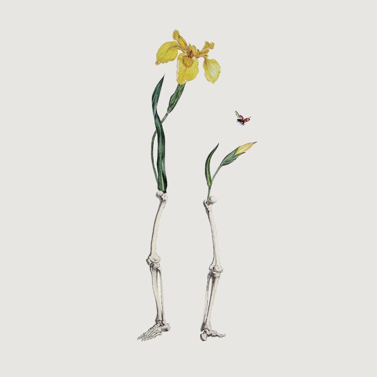 Ellie Douglass collage - legs with yellow iris flowers 2