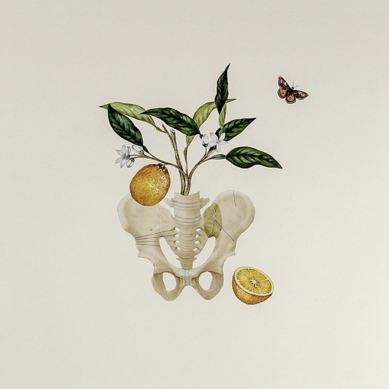 Ellie Douglass collage - pelvis with leaves and lemons