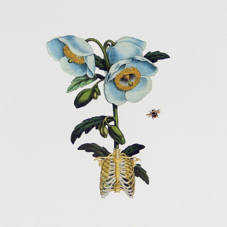 Ellie Douglass collage - ribcage with blue flowers